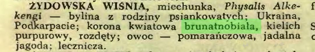 (...) ŻYDOWSKA WIŚNIA, miechunka, Physalis Alkękenęi — bylina z rodziny psiankowatych; Ukraina, Podkarpacie; korona kwiatowa brunatnobiała, kielich purpurowy, rozdęty; owoc — pomarańczowa, jadalna jagoda; lecznicza...