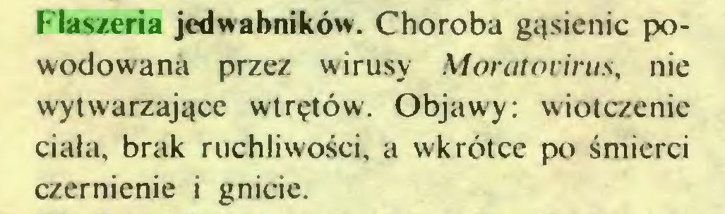 (...) Flaszeria jedwabników. Choroba gąsienic powodowana przez wirusy Moratocirus, nie wytwarzające wtrętów. Objawy: wiotczenie ciała, brak ruchliwości, a wkrótce po śmierci czernienie i gnicie...