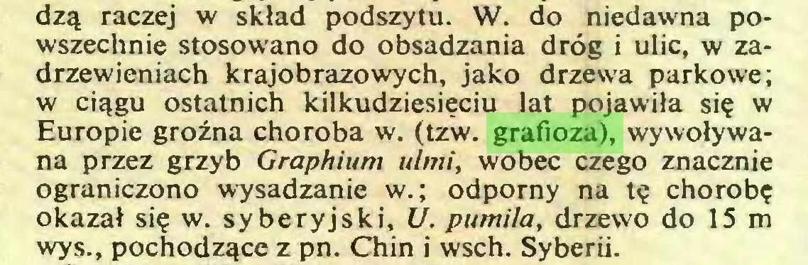 (...) dz^ raczej w sklad podszytu. W. do niedawna powszechnie stosowano do obsadzania drög i ulic, w zadrzewieniach krajobrazowych, jako drzewa parkowe; w ci^gu ostatnich kilkudziesieciu lat pojawila sie w Europie groina choroba w. (tzw. grafioza), wywolywana przez grzyb Graphium ulmi, wobec czego znacznie ograniczono wysadzanie w.; odpomy na te chorobe okazat sie w- syberyjski, U. pumila, drzewo do 15 m wys., pochodz^ce z pn. Chin i wsch. Syberii...