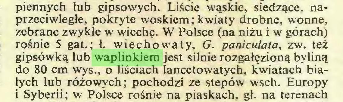 (...) piennych lub gipsowych. Liście wąskie, siedzące, naprzeciwległe, pokryte woskiem; kwiaty drobne, wonne, zebrane zwykle w wiechę. W Polsce (na niżu i w górach) rośnie 5 gat.; ł. wiec ho waty, G. paniculata, zw. też gipsówką lub waplinkiem jest silnie rozgałęzioną byliną do 80 cm wys., o liściach lancetowatych, kwiatach białych lub różowych; pochodzi ze stepów wsch. Europy i Syberii; w Polsce rośnie na piaskach, gł. na terenach...
