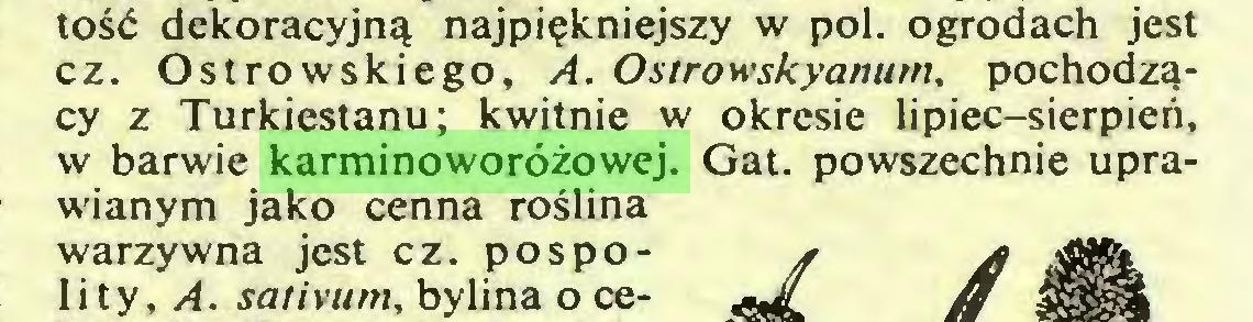 (...) tość dekoracyjną najpiękniejszy w poi. ogrodach jest cz. Ostrowskiego, A. Ostrowskyanum, pochodzący z Turkiestanu; kwitnie w okresie lipiec-sierpień, w barwie karminoworóżowej. Gat. powszechnie uprawianym jako cenna roślina warzywna jest cz. pospolity, A. sativum, bylina o ce...