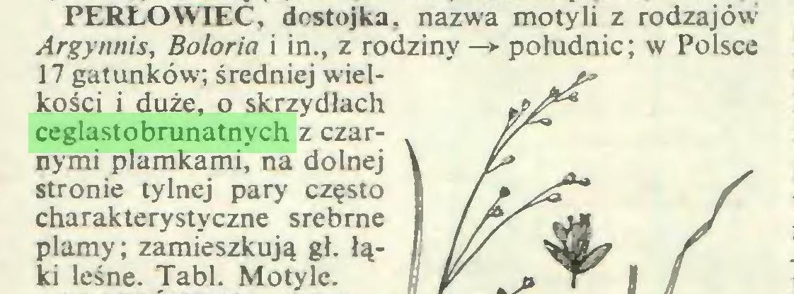 (...) PERŁOWIEC, destojka. nazwa motyli z rodzajów Argynnis, Boloria i in., z rodziny—>• południc; w Polsce 17 gatunków; średniej wielkości i duże, o skrzydłach ceglastobrunatnych z czarnymi plamkami, na dolnej stronie tylnej pary często charakterystyczne srebrne plamy; zamieszkują gł. łąki leśne. Tabl. Motyle...