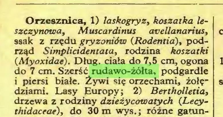 (...) Orzcsznica, 1) laskogryz, koszarka leszczynowa, Muscardinus atellanarius, ssak z rzędu gryzoniów (Rodenlia), podrząd Simplicidentata, rodzina koszałki (Myoxidae). Dług. ciała do 7,5 cm, ogona do 7 cm. Szerść rudawo-żółta, podgardle i piersi białe. Żywi się orzechami, żołędziami. Lasy Europy; 2) Bertholletia, drzewa z rodziny dzieżycowatych (Lecythidaceae), do 30 m wys.; różne gatun...