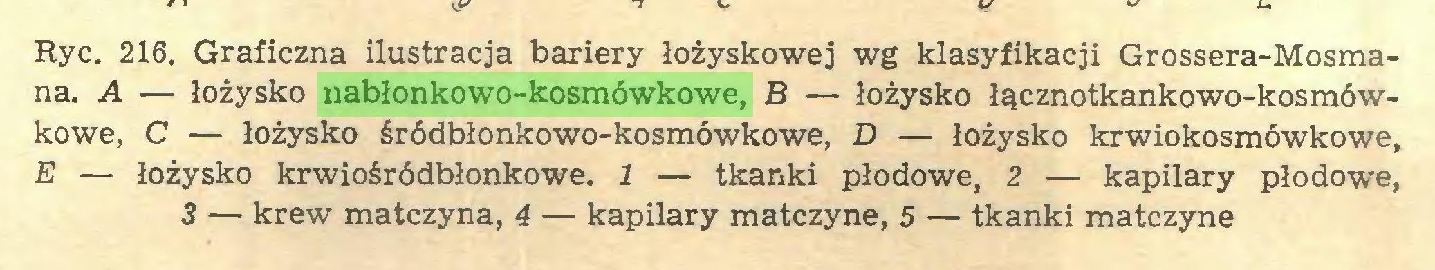 (...) Ryc. 216. Graficzna ilustracja bariery łożyskowej wg klasyfikacji Grossera-Mosmana. A — łożysko nabłonkowo-kosmówkowe, B — łożysko łącznotkankowo-kosmówkowe, C — łożysko śródbłonkowo-kosmówkowe, D — łożysko krwiokosmówkowe, E — łożysko krwiośródbłonkowe. 1 — tkanki płodowe, 2 — kapilary płodowe, 3 — krew matczyna, 4 — kapilary matczyne, 5 — tkanki matczyne...