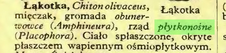 (...) Łąkotka, Chiton olivaceus, mięczak, gromada obunerwowce (Amphineura), rząd płytkonośne (Placophora). Ciało spłaszczone, okryte płaszczem wapiennym ośmiopłytkowym...