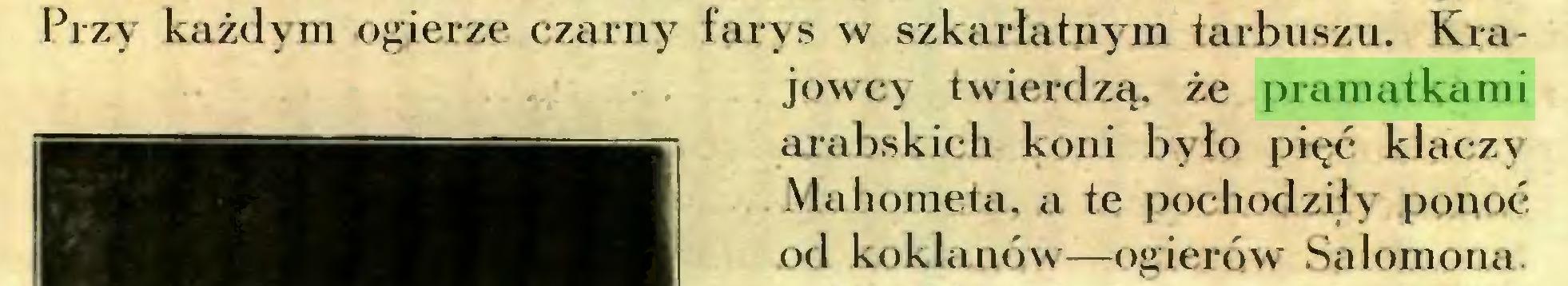 (...) Przy każdym ogierze czarny farys w szkarłatnym tarbuszu. Krajowcy twierdzą, że pramatkami arabskich koni było pięć klaczy Mahometa, a te pochodziły ponoć od koklanów—ogierów Salomona...