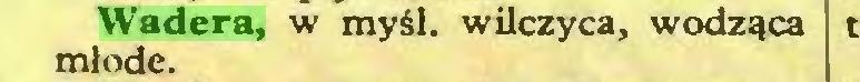 (...) Wadera, w myśl. wilczyca, wodząca młode...