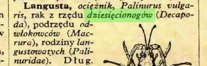 (...) Langusta, ocifżnik, Palinurus vulgaris, rak z rzędu dziesięcionogów (Decápodos, podrzędu odwlokowców (Macrura), rodziny langustowatych (Palinuridae). Dług...