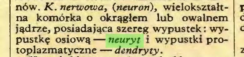 (...) nów. K. nerwowa, (neuron), wielokształtna komórka o okrągłem lub owalnem jądrze, posiadająca szereg wypustek: wypustkę osiową — neuryt i wypustki protoplazmatyczne — dendryty...