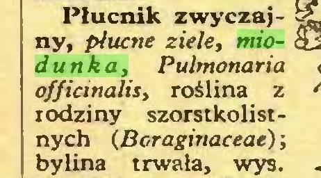 (...) Płucnik zwyczajny, płucne ziele, miodunka, Pulmonaria officinalis, roślina z rodziny szorstkolistnych (Boraginaceae); bylina trwała, wys...