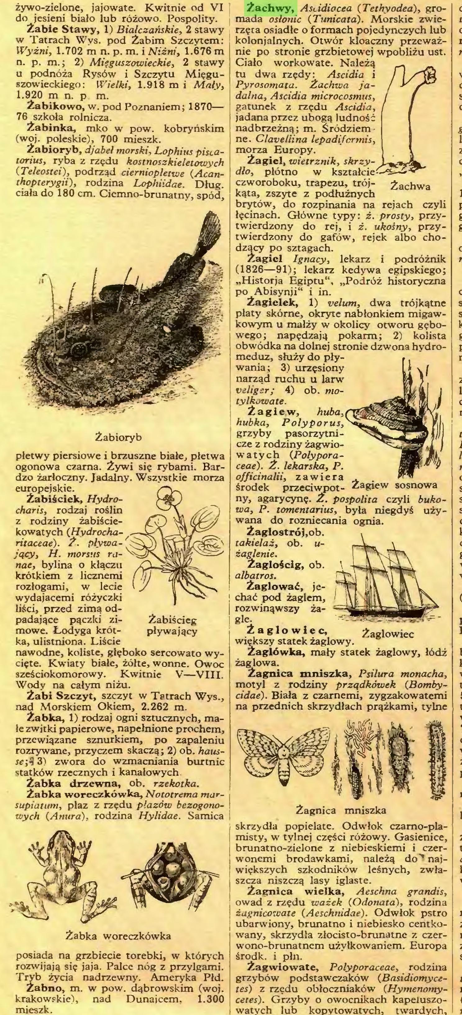 (...) krakowskie), nad Dunajcem, 1.300 mieszk. Żachwy, Astidiocea (Tethyodea), gromada osłonie {Tunicata). Morskie zwierzęta osiadłe o formach pojedynczych lub kolonialnych. Otwór kloaczny przeważnie po stronie grzbietowej wpobliżu ust...