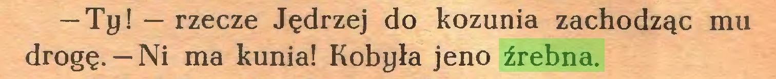 (...) — Ty! — rzecze Jędrzej do kozunia zachodząc mu drogę.— Ni ma kunia! Kobyła jeno źrebna...