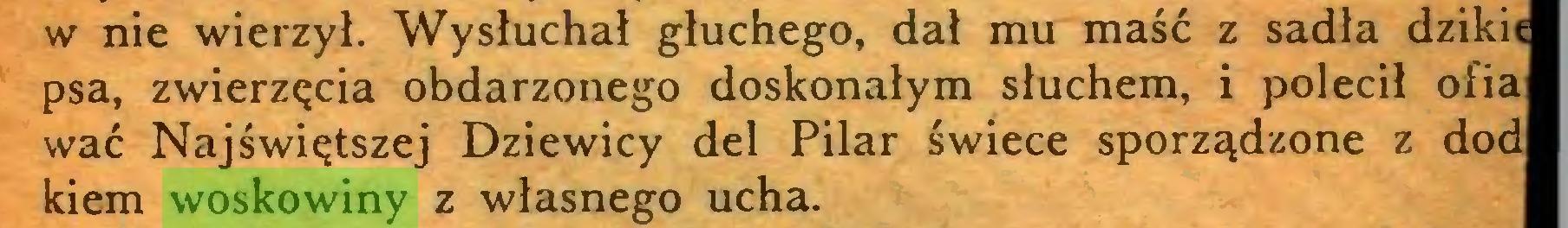 (...) w nie wierzył. Wysłuchał głuchego, dał mu maść z sadła dzikie psa, zwierzęcia obdarzonego doskonałym słuchem, i polecił ofia wać Najświętszej Dziewicy del Pilar świece sporządzone z dod kiem woskowiny z własnego ucha...