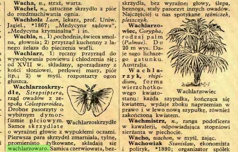 (...) Pierwsza para skrzydeł zmarniała, tylne, promienisto żyłkowane, składają się wachlarzowato. Samica czerwiowata, bez- skrzydla, bez wyraźnej głowy, ślepa, beznoga, stały pasorzyt innych owadów...