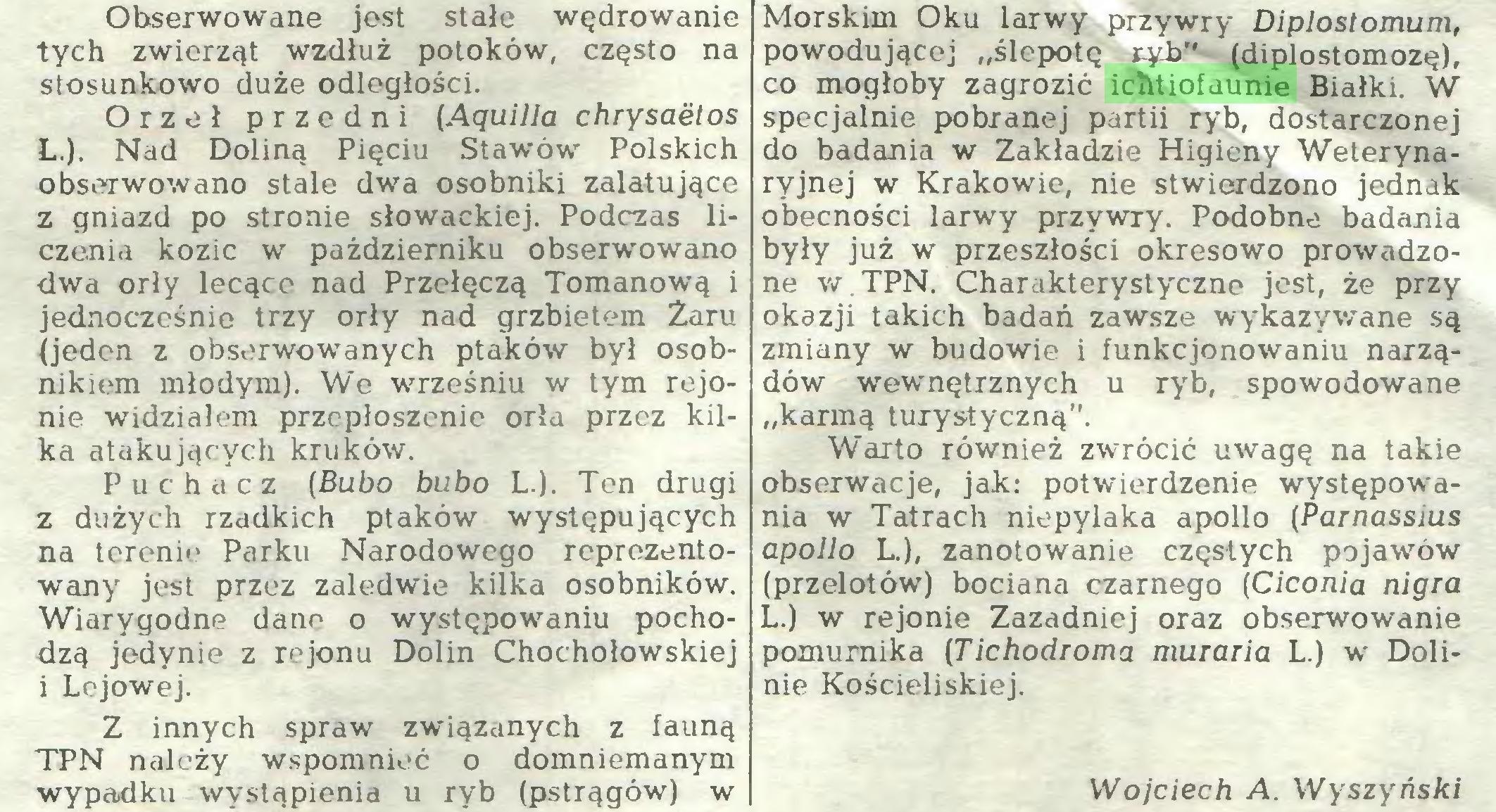 """(...) Z innych spraw związanych z fauną TPN należy wspomnieć o domniemanym wypadku wystąpienia u ryb (pstrągów) w Morskim Oku larwy przywry Diplostomum, powodującej """"ślepotę ryb"""" (diplostomozę), co mogłoby zagrozić ichtiofaunie Białki. W specjalnie pobranej partii ryb, dostarczonej do badania w Zakładzie Higieny Weterynaryjnej w Krakowie, nie stwierdzono jednak obecności larwy przywry. Podobne badania..."""