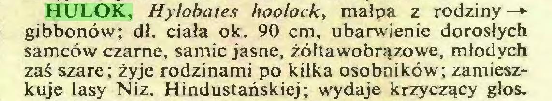 (...) HULOK, Hylobates hoolock, małpa z rodziny—► gibbonów; dł. ciała ok. 90 cm, ubarwienie dorosłych samców czarne, samic jasne, żółtawobrązowe, młodych zaś szare; żyje rodzinami po kilka osobników; zamieszkuje lasy Niz. Hindustańskiej; wydaje krzyczący głos...