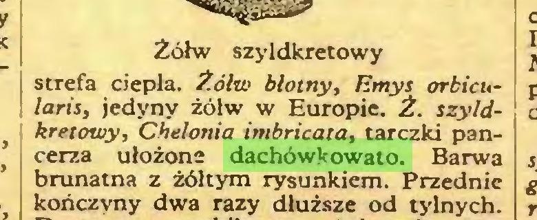 (...) Żółw szyldkretowy strefa ciepła. Żółw błotny, Emys orbicularis, jedyny żółw w Europie. Ż. szyldkretowy, Chelonia imbricata, tarczki pancerza ułożone dachówkowato. Barwa brunatna z żółtym rysunkiem. Przednie kończyny dwa razy dłuższe od tylnych...