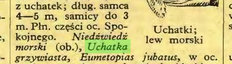 (...) z uchatek; dług. samca 4—5 m, samicy do 3 m. Płn. części oc. Spokojnego. Niedźwiedź morski (ob.), Uchatka grzywiasta, Eumetopias jubatus, w oc...