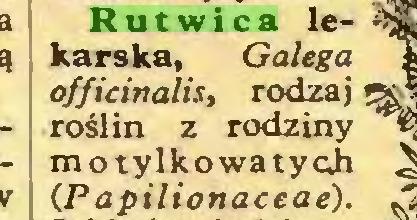 (...) Rutwica lekarska, Galega officinalis, rodzaj \ roślin z rodziny motylkowatych CP apilionaceae)...
