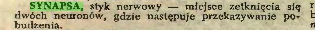 (...) SYNAPSA, styk nerwowy — miejsce zetknięcia się dwóch neuronów, gdzie następuje przekazywanie pobudzenia...