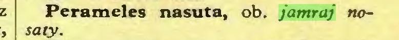 (...) Perameles nasuta, ob. jamraj nosaty...