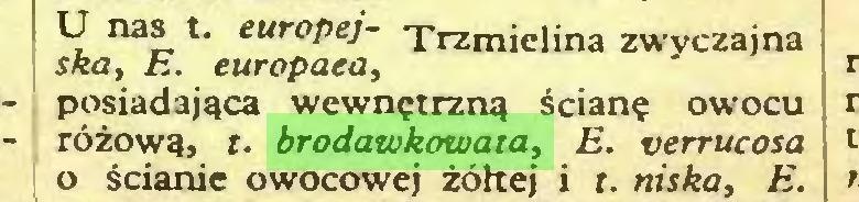 (...) U nas t. europej- Trzmielina zwyczajna ska, E. europaea, posiadająca wewnętrzną ścianę owocu różową, t. brodawkowata, E. verrucosa 0 ścianie owocowej żółtej i t. niska, E...