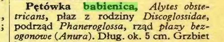 (...) Pętówka babienica, Alytes obstetricans, płaz z rodziny Discoglossidae, podrząd Phaneroglossa, rząd plaży bezogonowe (Anura). Dług. ok. 5 cm. Grzbiet...