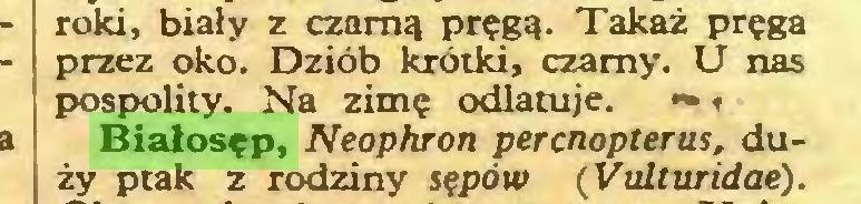 (...) roki, biały z czarną pręgą. Takaż pręga przez oko. Dziób krótki, czarny. U nas pospolity. Na zimę odlatuje. ~ 1 Białosęp, Neophron perenopterus, duży ptak z rodziny sępów (Vulturidaé)...