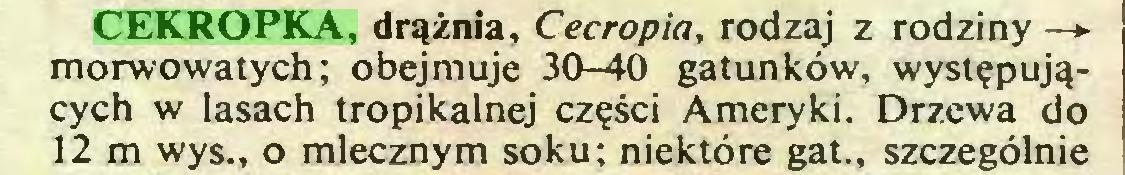 (...) CEKROPKA, drążnia, Cecropia, rodzaj z rodziny — morwowatych; obejmuje 30-40 gatunków, występujących w lasach tropikalnej części Ameryki. Drzewa do 12 m wys., o mlecznym soku; niektóre gat., szczególnie...