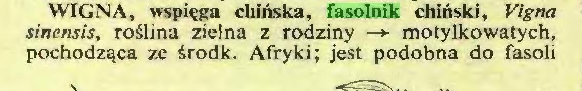 (...) WIGNA, wspi?ga chinska, fasolnik chinski, Vigna sinensis, roälina zielna z rodziny —► motylkowatych, pochodzqca ze ärodk. Afryki; jest podobna do fasoli...