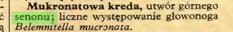 (...) Mukronatowa kreda, utwór górnego senonu; liczne występowanie głowonoga Belemnitella mucronata...