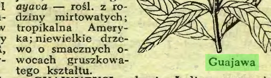 (...) ayava — rośl. z rodziny mirtowa tych; tropikalna Ameryka; niewielkie drzewo o smacznych owocach gruszkowa- Guajawa tego kształtu...
