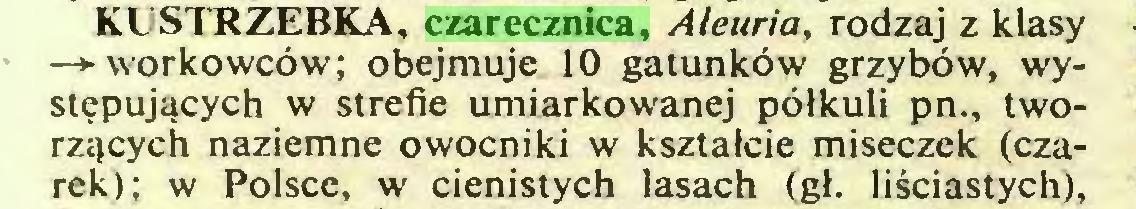 (...) KUSTRZEBKA, czarecznica, Aleuria, rodzaj z klasy —► workowców; obejmuje 10 gatunków grzybów, występujących w strefie umiarkowanej półkuli pn., tworzących naziemne owocniki w kształcie miseczek (czarek); w Polsce, w cienistych lasach (gł. liściastych),...
