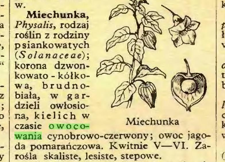 (...) w. Miechunka, Physalis, rodzaj roślin z rodziny psiankowatych (Solanaceae); korona dzwonkowato - kółkow a, brudnobiała, w gardzieli owłosiona, kielich w czasie owocowania cynobrowo-czerwony; owoc jagoda pomarańczowa. Kwitnie V—VI. Zarośla skaliste, lesiste, stepowe...
