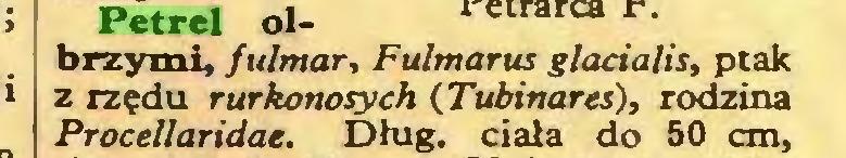(...) Petrel olbrzymi, fulmar, Fulmarus glacialis, ptak z rzędu rurkonosych (Tubinares), rodzina Procellaridae. Dług. ciała do 50 cm,...