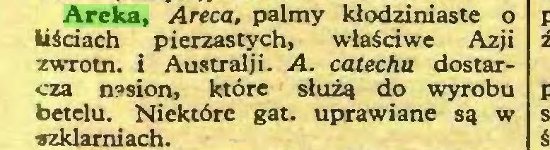 (...) Areka, Areca, palmy klodziniaste o liściach pierzastych, właściwe Azji zwrotn. i Australii. A. catechu dostarcza nasion, które służą do wyrobu betelu. Niektóre gat. uprawiane są w szklarniach...