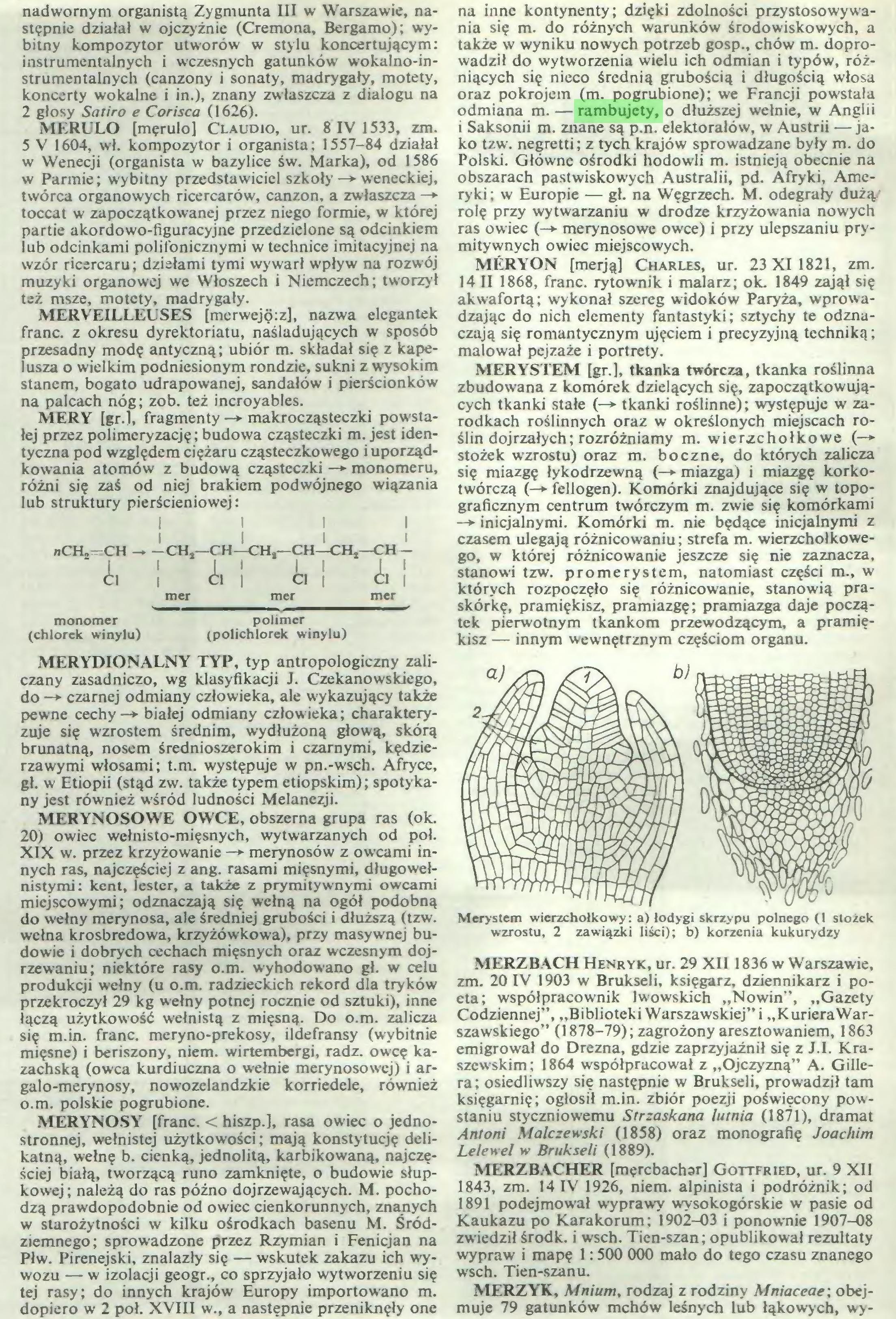 (...) dopiero w 2 poł. XVIII w., a następnie przeniknęły one na inne kontynenty; dzięki zdolności przystosowywania się m. do różnych warunków środowiskowych, a także w wyniku nowych potrzeb gosp., chów m. doprowadził do wytworzenia wielu ich odmian i typów, różniących się nieco średnią grubością i długością włosa oraz pokrojem (m. pogrubione); we Francji powstała odmiana m. — rambujety, o dłuższej wełnie, w Anglii i Saksonii m. znane są p.n. elektorałów, w Austrii —jako tzw. negretti; z tych krajów sprowadzane były m. do Polski. Główne ośrodki hodowli m. istnieją obecnie na...