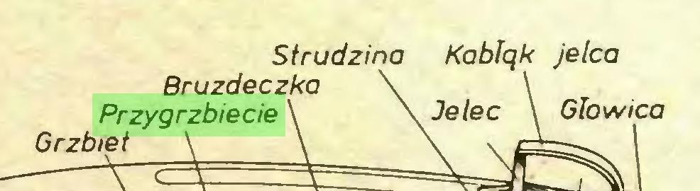 (...) Strudzina Kablqk jelca Bruzdeczka Przygrzbiecie \ Grzbiet Głowica...