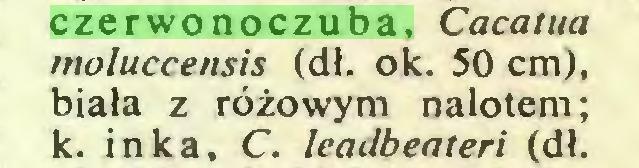 (...) czerwonoczuba, Caeatua moluccensis (dł. ok. 50 cm), biała z różowym nalotem; k. inka, C. leadbeateri (dł...