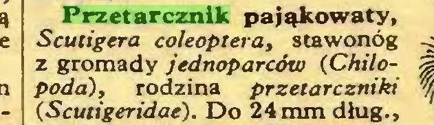 (...) Przetarcznik pająkowaty, Scutigera coleóptera, stawonóg z gromady jednoparców (Chilopoda), rodzina przetarczniki (Scutigeridae). Do 24 mm dług.,...