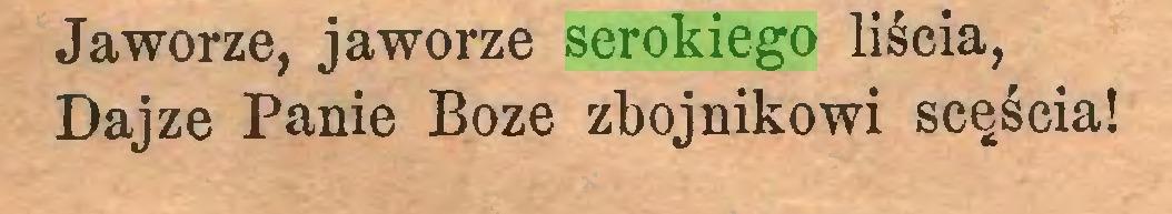 (...) Jaworze, jaworze serokiego liścia, Dajze Panie Boże zbójnikowi scęścia!...