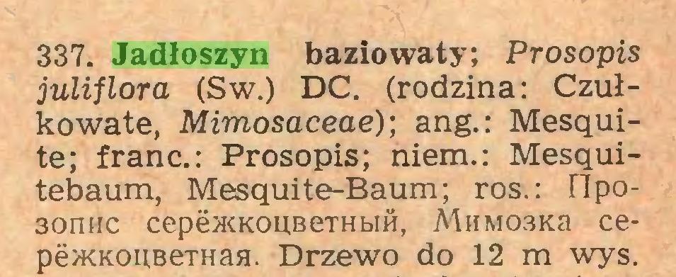 (...) 337. Jadłoszyn baziowaty; Prosopis juliflora (Sw.) DC. (rodzina: Czułkowate, Mimosaceae); ang.: Mesąuite; franc.: Prosopis; niem.: Mesąuitebaum, Mesquite-Baum; ros.: Hipo30iihc cepeiKKOUBeTHbtH, MnM03Ka cepeyKKOUBeTHaa. Drzewo do 12 m wys...