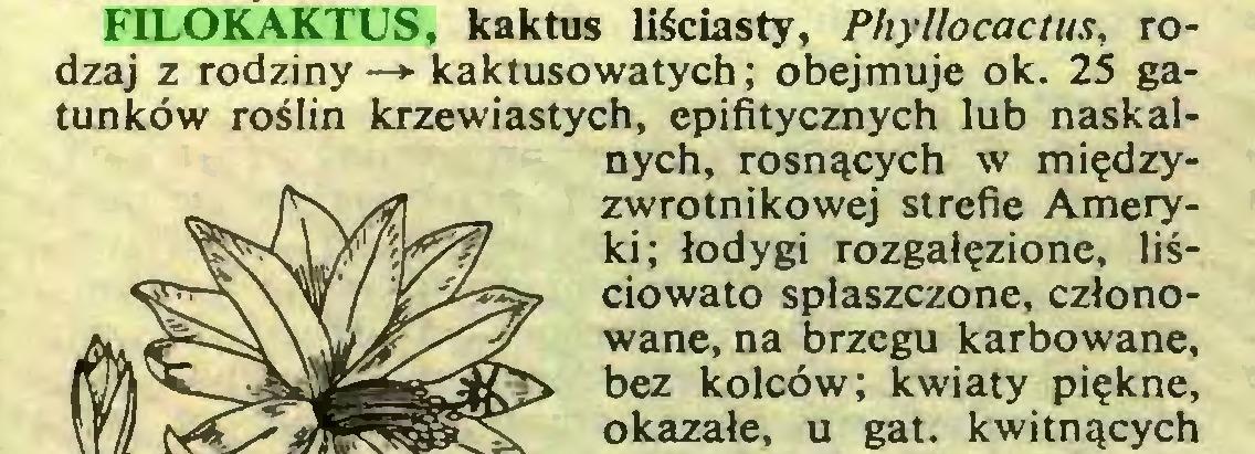 (...) FILOKAKTUS, kaktus liściasty, Phyllocactus, rodzaj z rodziny —► kaktusowatych; obejmuje ok. 25 gatunków roślin krzewiastych, epifitycznych lub naskalnych, rosnących w międzyzwrotnikowej strefie Ameryki; łodygi rozgałęzione, liściowato spłaszczone, członowane, na brzegu karbowane, bez kolców; kwiaty piękne, okazałe, u gat. kwitnących...