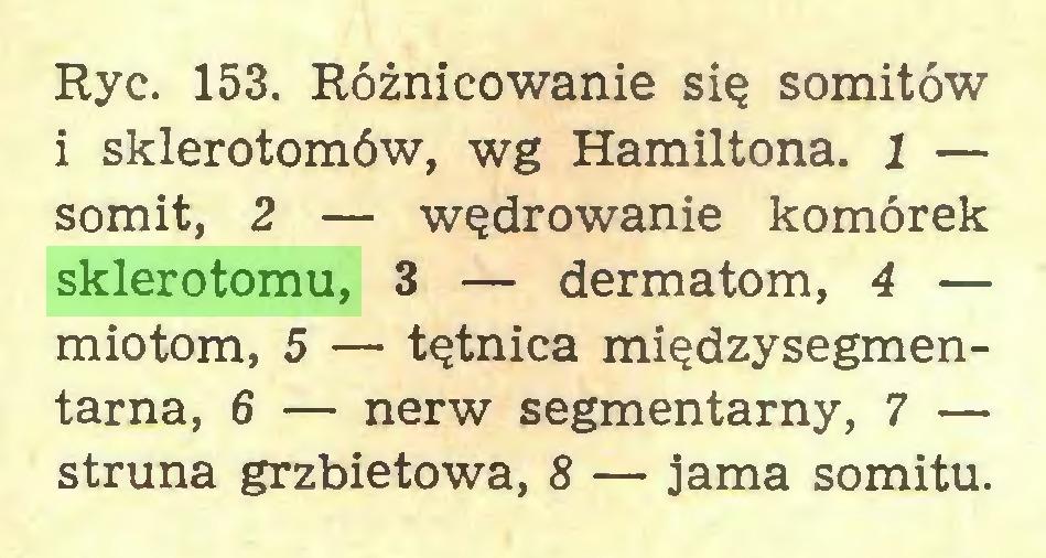 (...) Ryc. 153. Różnicowanie się somitów i sklerotomów, wg Hamiltona. 1 — somit, 2 — wędrowanie komórek sklerotomu, 3 — dermatom, 4 — miotom, 5 — tętnica międzysegmentarna, 6 — nerw segmentarny, 7 — struna grzbietowa, 8 — jama somitu...