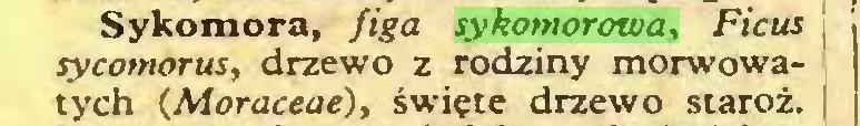 (...) Sykomora, figa sykomorowa, Ficus sycomorus, drzewo z rodziny morwowatych (Moraceae), święte drzewo staroż...