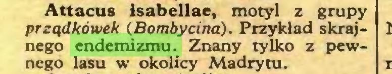(...) Attacus łsabellae, motyl z grupy prządkówek (Bombycina). Przykład skrajnego endemizmu. Znany tylko z pewnego lasu w okolicy Madrytu...