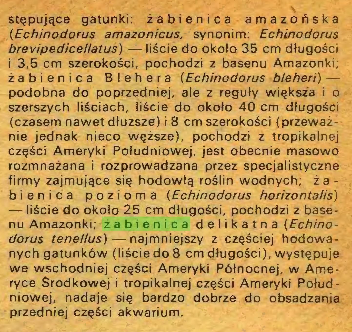 (...) stępujące gatunki: żabienica amazońska (Echinodorus amazonicus, synonim: Echinodorus brevipedice//atus) — liście do około 35 cm długości i 3,5 cm szerokości, pochodzi z basenu Amazonki; żabienica Blehera (Echinodorus bleheri) — podobna do poprzedniej, ale z reguły większa i o szerszych liściach, liście do około 40 cm długości (czasem nawet dłuższe) i 8 cm szerokości (przeważnie jednak nieco węższe), pochodzi z tropikalnej części Ameryki Południowej, jest obecnie masowo rozmnażana i rozprowadzana przez specjalistyczne firmy zajmujące się hodowlą roślin wodnych; ż a bienica pozioma (Echinodorus horizontalis) — liście do około 25 cm długości, pochodzi z basenu Amazonki; żabienica delikatna (Echinodorus tene/lus)—najmniejszy z częściej hodowanych gatunków (liście do 8 cm długości), występuje we wschodniej części Ameryki Północnej, w Ameryce Środkowej i tropikalnej części Ameryki Południowej, nadaje się bardzo dobrze do obsadzania przedniej części akwarium...