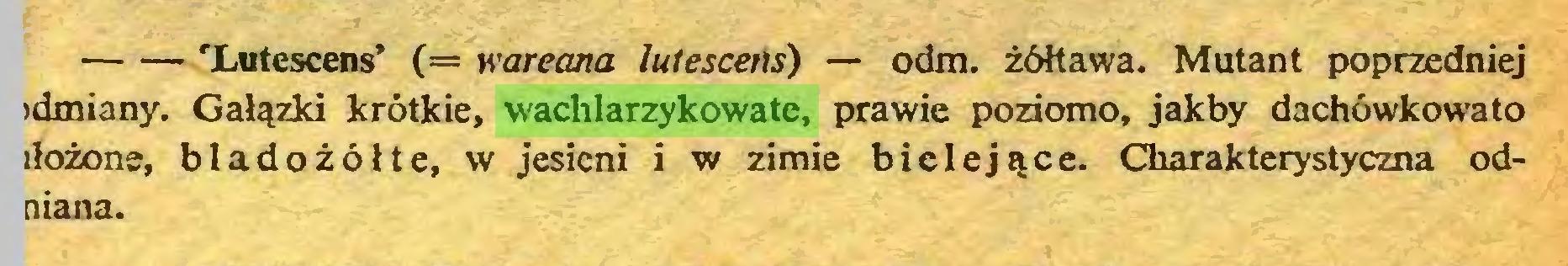 (...) 'Lutescens' (= wareana lutescefís) — odm. żółtawa. Mutant poprzedniej idmiany. Gałązki krótkie, wachlarzykowate, prawie poziomo, jakby dachówkowato iłożone, bladożółte, w jesieni i w zimie bielejące. Charakterystyczna odniana...