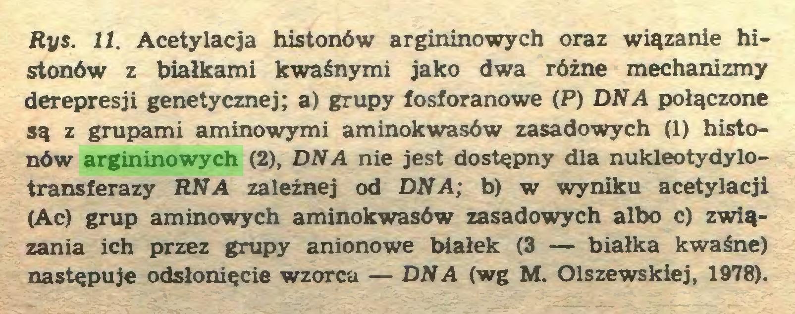 (...) Rys. 11. Acetylacja histonów argininowych oraz wiązanie histonów z białkami kwaśnymi jako dwa różne mechanizmy derepresji genetycznej; a) grupy fosforanowe (P) DNA połączone są z grupami aminowymi aminokwasów zasadowych (1) histonów argininowych (2), DNA nie jest dostępny dla nukleotydylotransferazy RN A zależnej od DNA; b) w wyniku acetylacji (Ac) grup aminowych aminokwasów zasadowych albo c) związania ich przez grupy anionowe białek (3 — białka kwaśne) następuje odsłonięcie wzorca — DNA (wg M. Olszewskiej, 1978)...