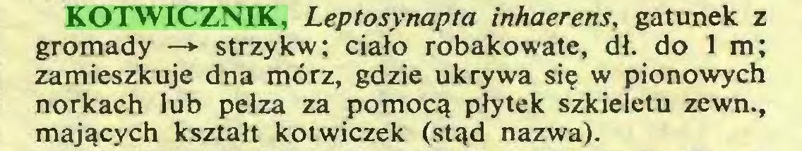 (...) KOTWICZNIK, Leptosynapta inhaerens, gatunek z gromady —> strzykw; ciało robakowate, dł. do 1 m; zamieszkuje dna mórz, gdzie ukrywa się w pionowych norkach lub pełza za pomocą płytek szkieletu zewn., mających kształt kotwiczek (stąd nazwa)...